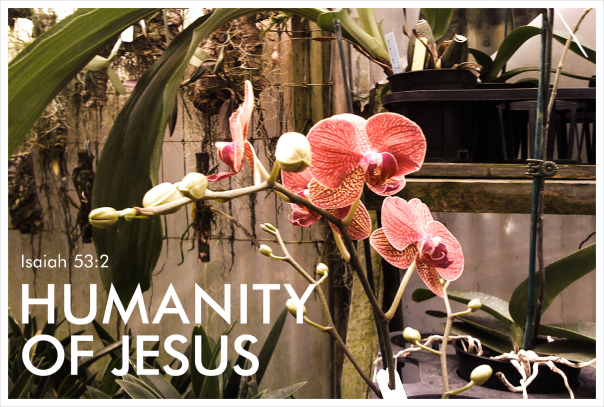 humanity-of-jesus2