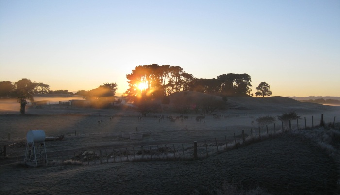 Sunrise over farm near Palmerston North, NZ